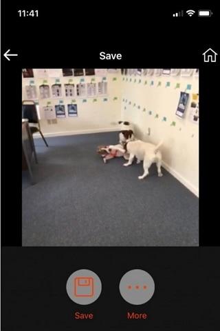 enregistrer la vidéo Instagram recadrée
